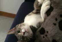 Furbetta / La mia gattina