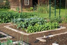 Bahçe ekimi