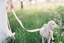 Wedding on a Farm / We love our farm weddings!