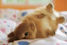 coniglieti dolci