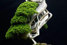 jardin et bonsai