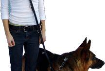Service Dog / by Alexie Gillespie