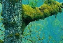 Vihreät metsät