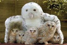 animais lindos família