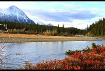 Yukon river canoe trip : Moose & bear observation / From Carmacks to Dawson 12 days canoeing in the wilderness