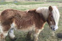 Heste/horses / Heste i dens natur/horse in nature