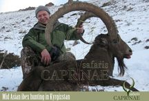 Mid Asian Ibex hunting in Kyrgyzstan