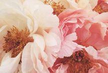 Nature - Flower