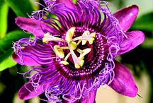 Things that bloom / by Elanah Sykes