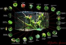 Plants Vivarium