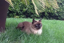Cats and other animals / @ Villa Bardini cats and animals loves to sunbathing in the garden