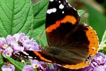 Butterflies / by Mina Fox