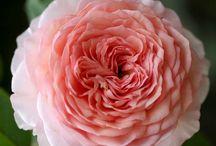 Kvety-Flowers