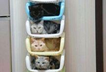 Cats for Danusia