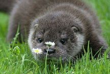 Otters ♡♡♡