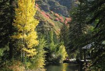 Autumn Glories / Park City Utah