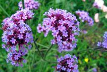 Живые цветы как примеры