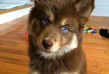 Cutie Pups