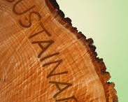 Sustainable timber for paper / Showing how our paper comes from Sustainable Sources