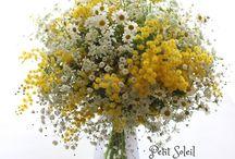 すてきなお花