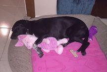 MOCHA / Ailemizin köpeği
