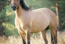 Horsepictures / Beautiful creature