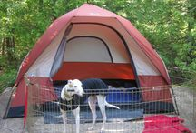 Holidays with dogs / Travel ideas