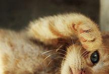 Soft Kitty, Warm Kitty / by Kaylee Lloyd