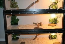 reptile cages
