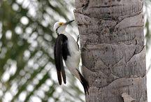 Birdwatching Brasil / Observação de Pássaros (Birdwatching) nas pousadas, hotéis e resorts do Brasil.