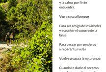 Naturaleza / Uno de los pilares de Vacaciones en Gredos es vivir y disfrutar la maravillosa naturaleza que nos rodea.