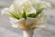 Calla Lily Bouquets & Arrangements / Bridal bouquets and flower arrangements of calla lilies for weddings and special events