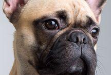 Hunden vi skal ha'