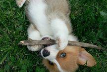 Puppies! <3