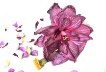 Floral inspiration / Flora, foliage and all things living and found on our beautiful planet. Treasure its beauty always.