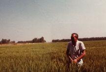 Back in the days! / agricoltura d'altri tempi