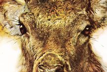 Animal paintings / by Doug Bell