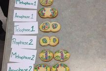 cell division for Kids