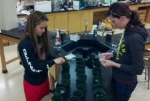AP Biology Investigation #1 / Helpful materials for this inquiry into Artificial Selection with Wisconsin Fast Plants