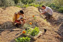 piante e orto