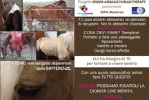 Progetto Anima Animale Human Therapy