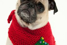 Stuff for the Pugs