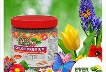 Productos / Los productos EverGreen poseen gran cantidad de vitaminas y nutrientes necesarios para que las plantas estén saludables y hermosas