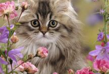 Cats and kittens / by Brenda Refsland