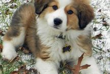 Puppies Puppies Puppies!