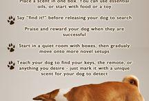 Dogs - Behavioral Enrichment