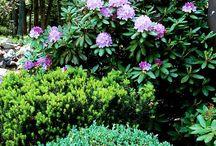 Evergreen Shade Garden