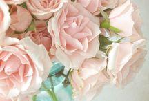 Pink blushing spring