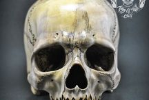 Hand Carved Human Skull Realistic Jawless from Prickly Ash Wood / Find this skull on Etsy
