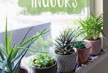 Plant It / by Jillian Martin